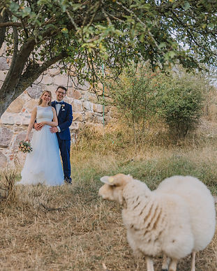 A groom and bride embracing at Bornholm Island with a sheep looking at them during their charming adventure made possible by booking one of Nordic Adventure Weddings Denmark elopement packages.