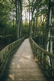 A romantic, wooden bridge at Møn Island, a perfect destination for couples that want to get married in Denmark and elope abroad to nature.