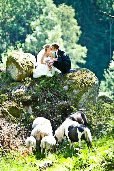 A couple kissing on top of rocks surrounded by sheep during their intimate wedding abroad.