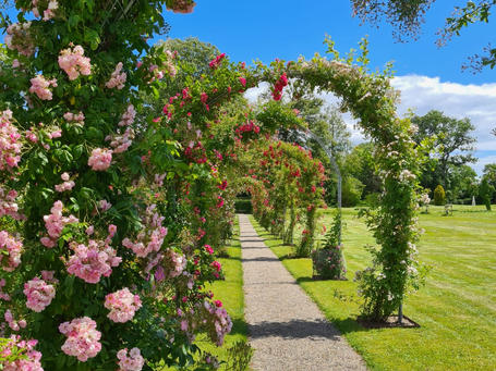 A view of the rose garden, a romantic destination wedding venue abroad for a wedding in Denmark.