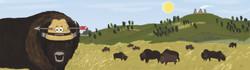 16_bison
