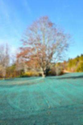 Autumn Tree in a Hydroseeded Field.jpg
