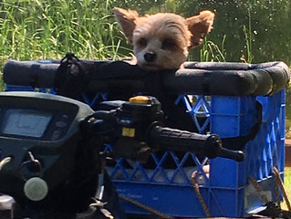 ATV Rides Galore... for everyone!