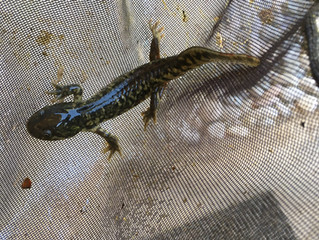 Salamanders, and fish, and guppies, oh my!