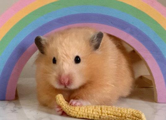 Dehydrated Baby Corn