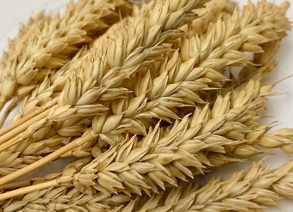 Organic Wheat Stalks (Fatpouches)