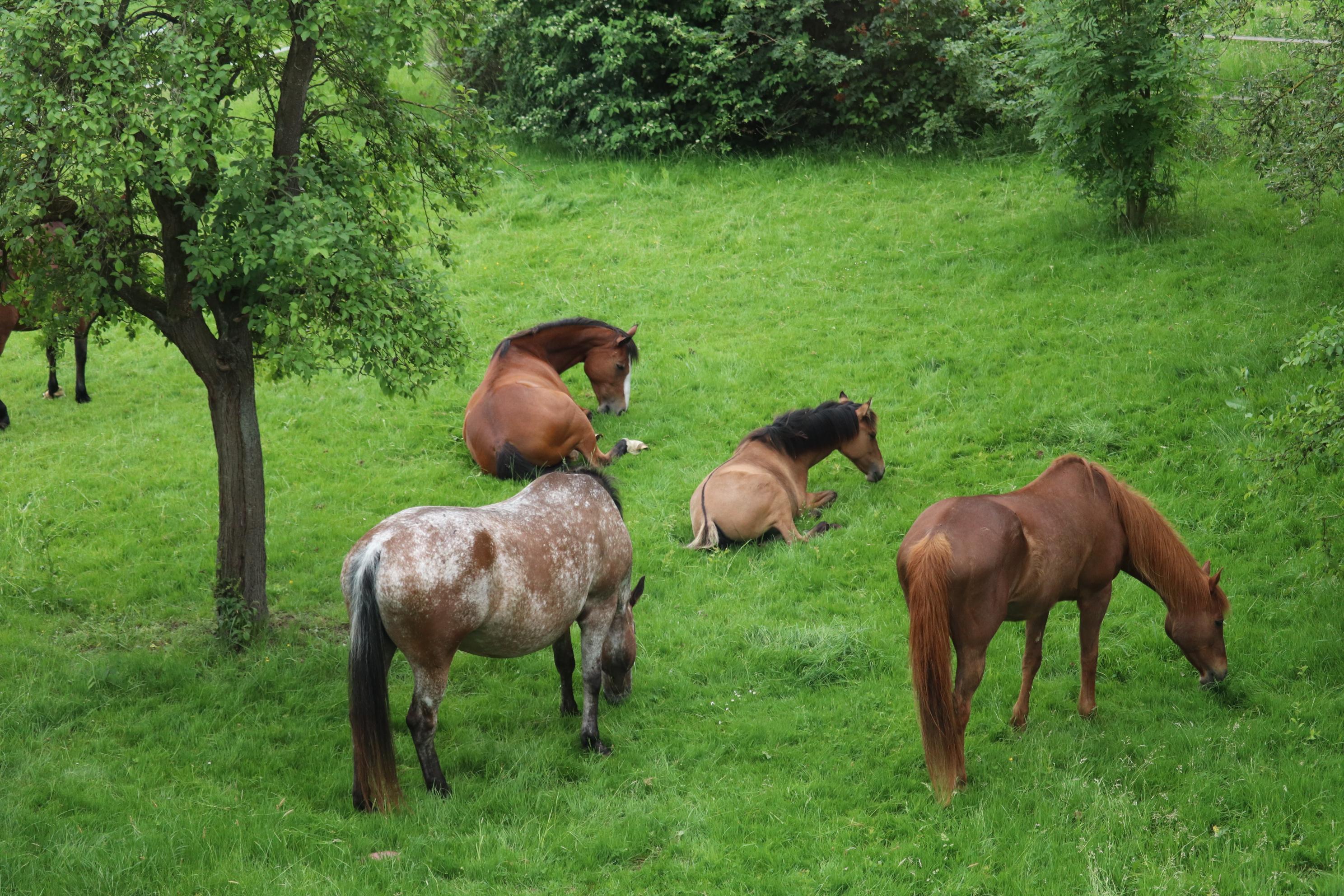Pferde des Mönchehof