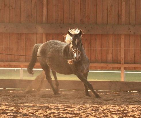 Pferdesprache lernen.jpg