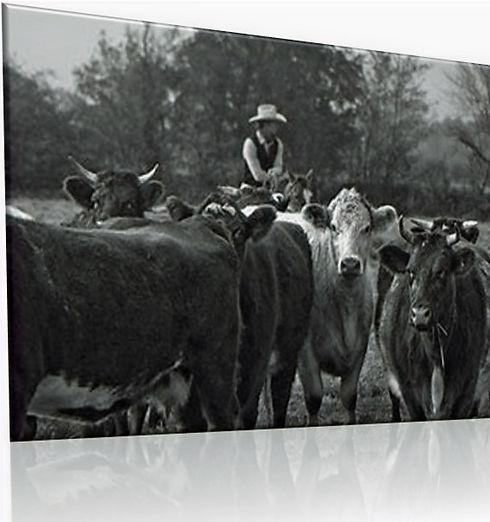 Rinderkurs mit Oliver Kraft