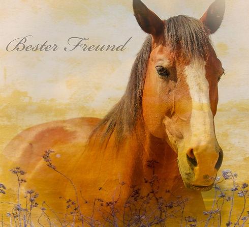 Kommunikation mit deinem Pferd.jpg