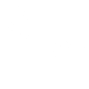 white dragonfly.png