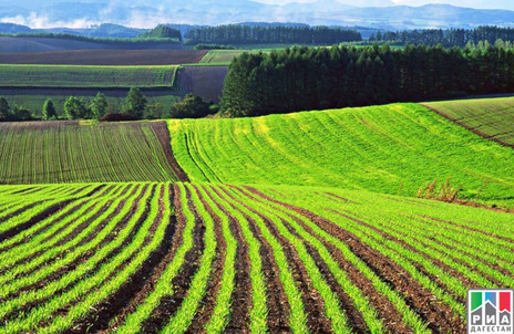 Заур Аскендеров: Дагестан всегда славился своими аграрными достижениями