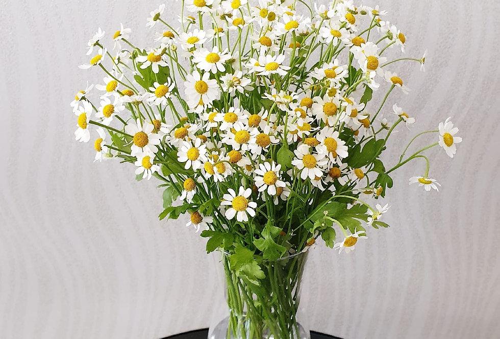 (D03) Daisy in a Vase - Mini Daisy