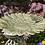 Thumbnail: METAL GARDEN FROG BIRD FEEDER