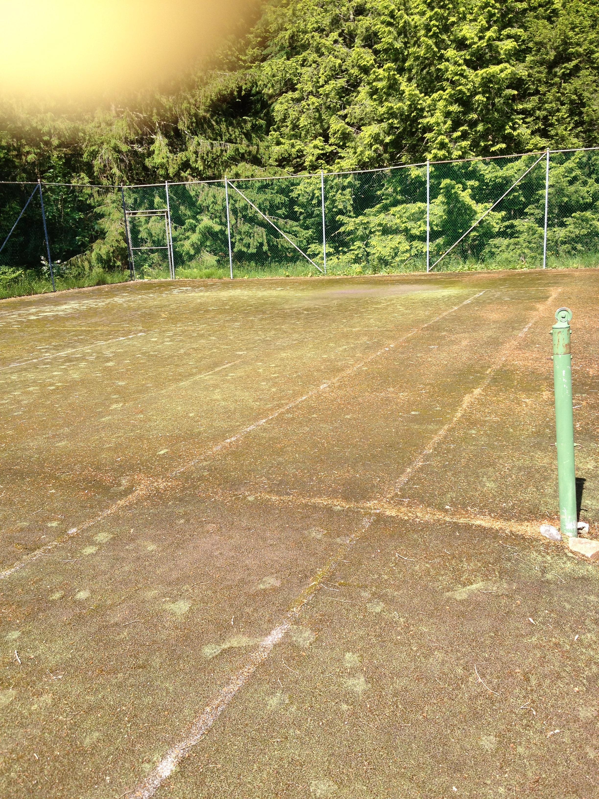 Tennis moss