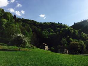 Field-houses-spring.jpg