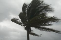 palmera_en_el_viento