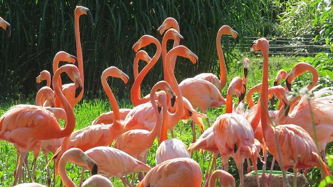 10 อันดับสวน ที่คนส่วนใหญ่สนใจ ท่องเที่ยวกัน