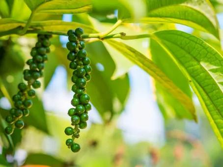 ปลูกอะไรดี   10 อันดับ พืชผักหรือผลไม้ ที่เกษตรกรสนใจปลูกกัน