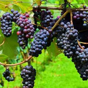 10 อันดับ พืชผักหรือผลไม้ ที่เกษตรกรสนใจปลูกกัน | ปลูกอะไรดี