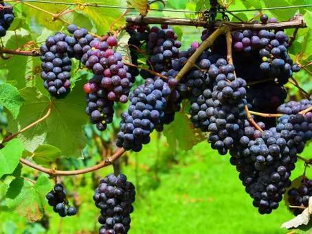 10 อันดับ พืชผักหรือผลไม้ ที่เกษตรกรสนใจปลูกกัน   ปลูกอะไรดี