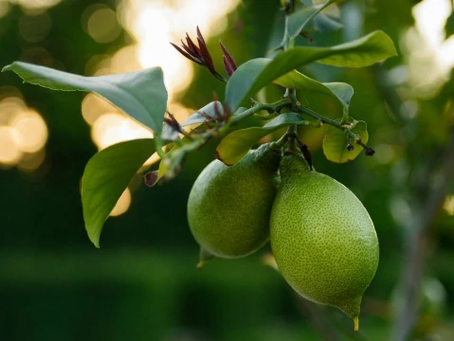 10 พืชผักหรือผลไม้ ที่เกษตรกรสนใจปลูกกัน | ปลูกอะไรดี