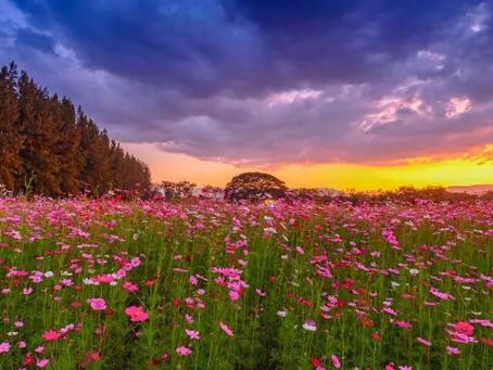 5 อันดับ ทุ่งสวน ที่คนส่วนใหญ่เที่ยวกัน   เที่ยวไหนดี เที่ยวทุ่งสวนที่ไหนดี