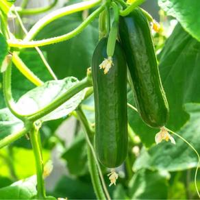 ปลูกอะไรขายดี | 10 พืชผักผลไม้ เชิงเกษตร ยอดนิยมในเดือนมิถุนายน 2021