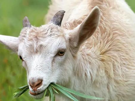 10 สัตว์เลี้ยง ที่เกษตรกรสนใจเลี้ยงกัน   เลี้ยงอะไรดี