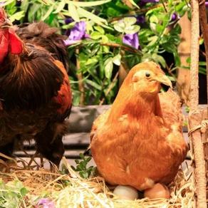 10 อันดับ สัตว์เลี้ยง ที่เกษตรกรสนใจเลี้ยงกัน | เลี้ยงอะไรดี