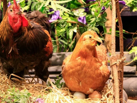 เลี้ยงอะไรดี | 5 อันดับ สัตว์เลี้ยง ที่เกษตรกรสนใจเลี้ยงกัน