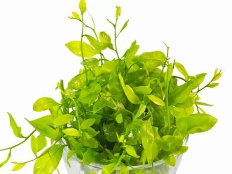 ปลูกอะไรดี | 10 อันดับ พืชผักหรือผลไม้ ที่เกษตรกรสนใจปลูกกัน