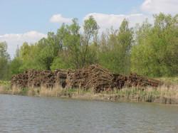 biesbosch-stevenbanken10.jpg