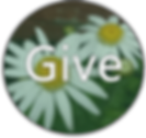 give button green P N G.png