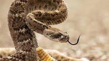 Rattlesnake Advisory