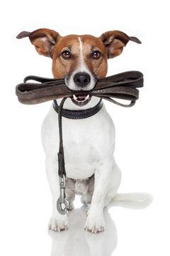 Dog walking scottsdale