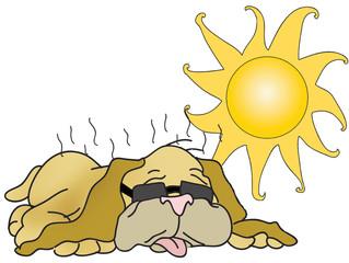 Dehydration & Heat Stroke