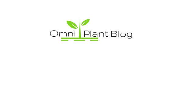 Omni Plant CBD Blog Wissen