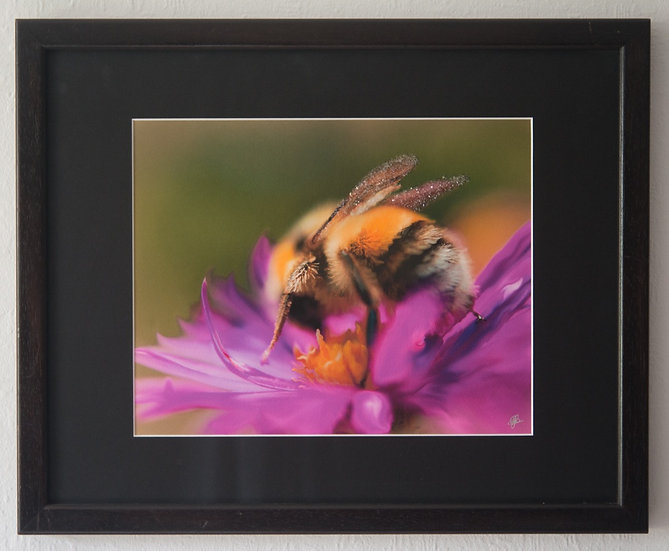 My Big Bee Project - Image 9