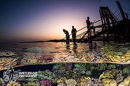Sunset Snorkel.jpg