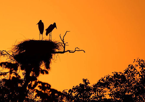 pantanal151.jpg