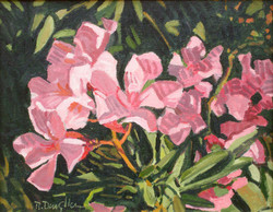 Oleander Color