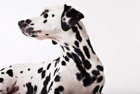 CuraDog - Bio-Hundevollnahrung mit hohem Fleischanteil!