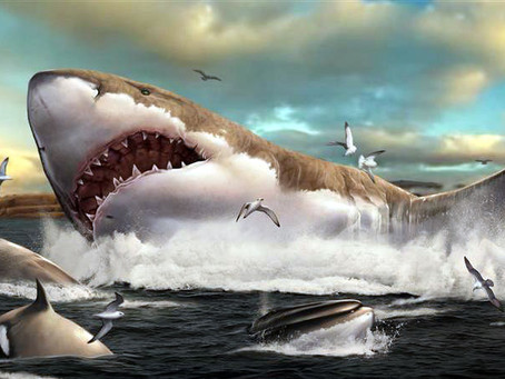 Are Megaladons Really Extinct?