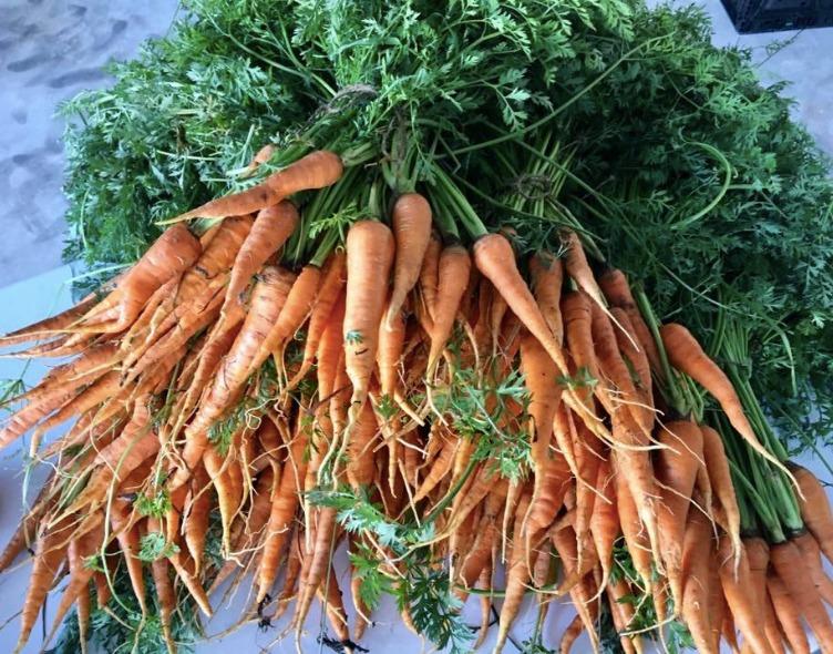 carrots_edited