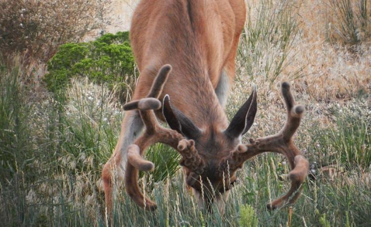Antlers!819.jpg