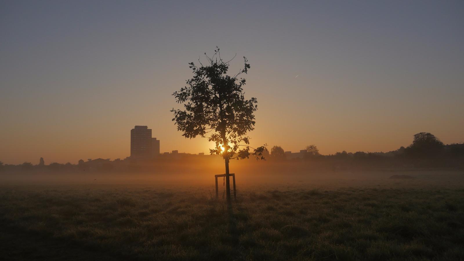 Rec Sunrise