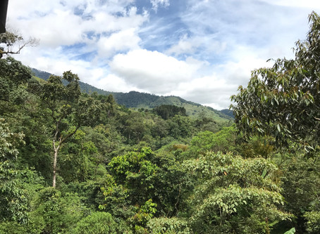 Our Move to Costa Rica (or How We Sold Everything, Embraced Freefall, and Even Avoided Going to Jail