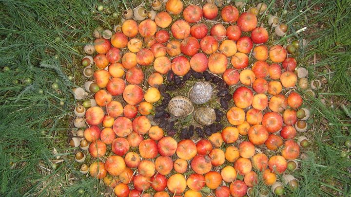 Facebook - Juin' s Autumn equinox mandala