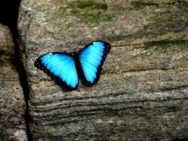 Facebook - Emerging  butterflies...jpg